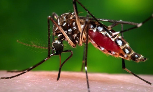 WHATCH'EM is now being leveraged for use in other model-based studies funded by NASA, NIH and DTRA to develop an early warning system for dengue risk.